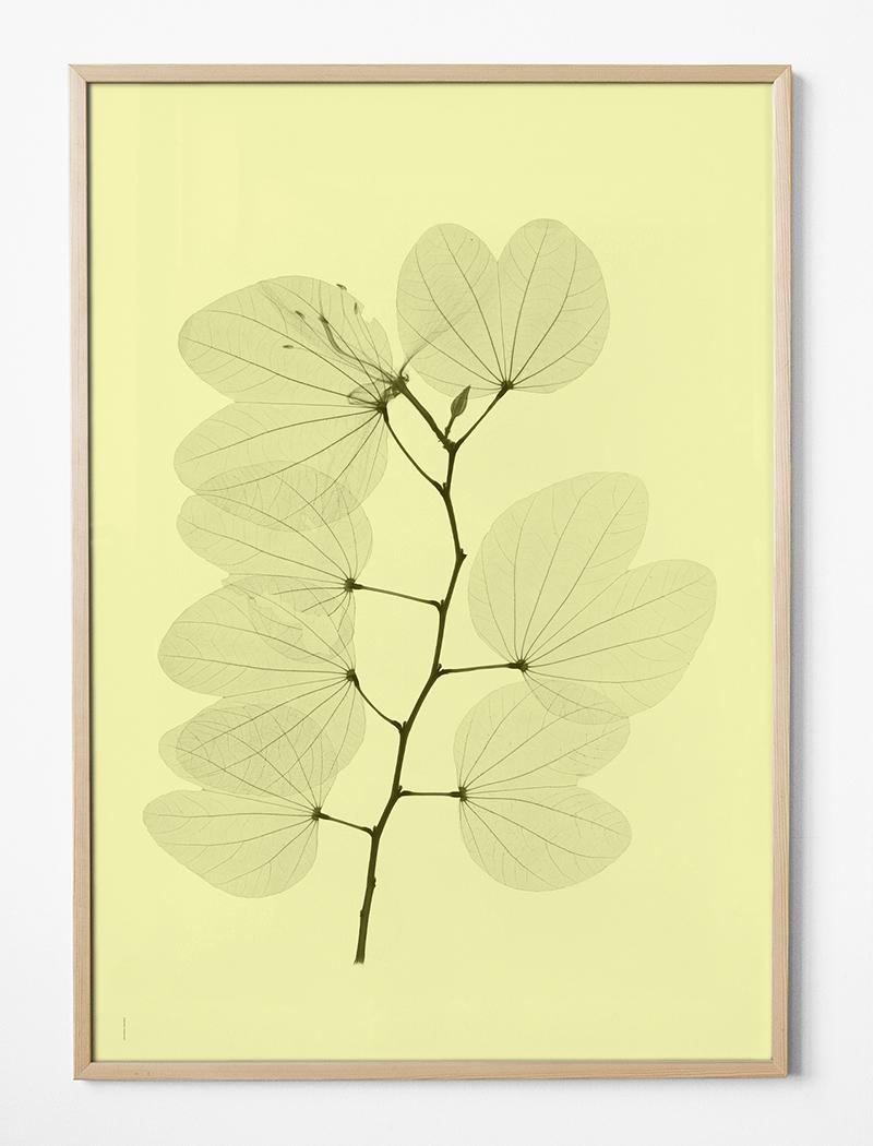 fine little day Poster Orkidebauhunia
